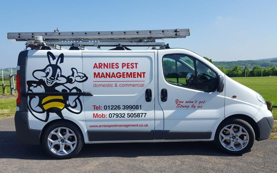4 Reasons to Use Professional Pest Control