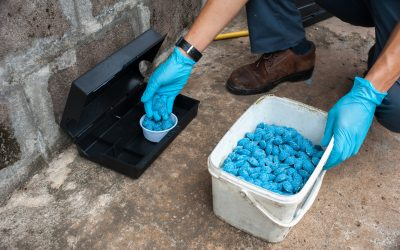 Reasons Why You Should Hire a Professional for Pest Control